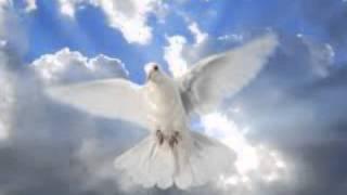 Fly Like A Bird  Ken Canedo cover