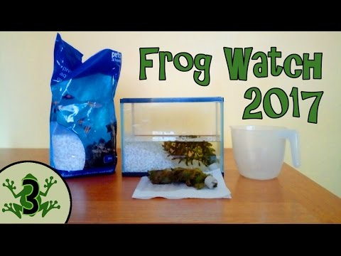 Frog Watch 2017 - How To Look After Tadpoles And Frogs - Setting Up An Aquarium [3]