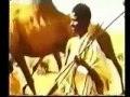 Somali  History(Taarikh) Part 2