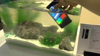 Hisense king kong 2 hands-on video waterproof & shockproof test MWC 2016