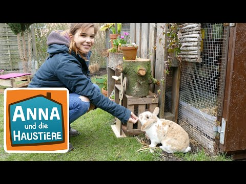 Zwergkaninchen   Information für Kinder   Anna und die Haustiere