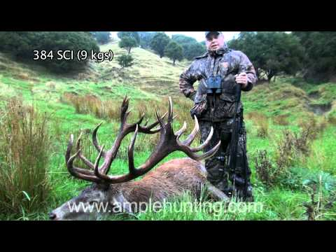 hunting-new-zealand-ample-hunting-red-stag.html