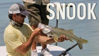 SALTWATER FISHING TIPS: Snook Fishing