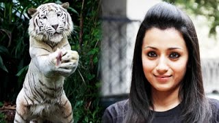 Trisha's Petition to President regarding Vijay