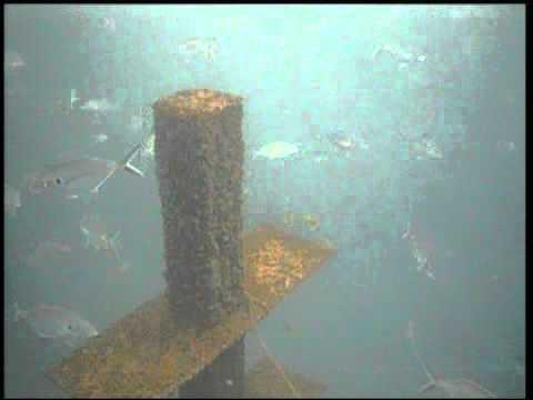 Offshore Artificial Reef fish surveillance video.wmv
