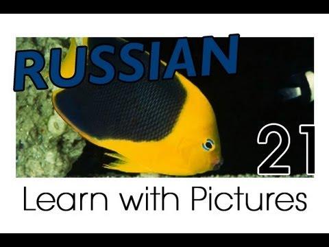 Learn Russian - Russian Marine Animals Vocabulary