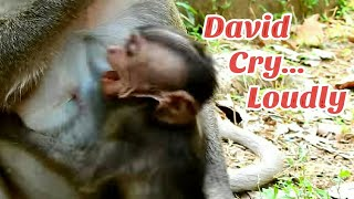 Pity baby David cry loudly, it's too young baby monkey, why they do like this?