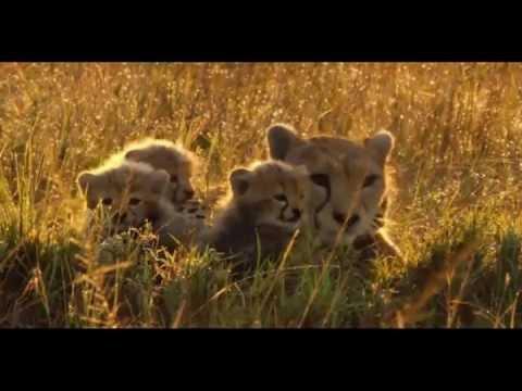 Salvajes Africa áfrica Salvaje Tierra de