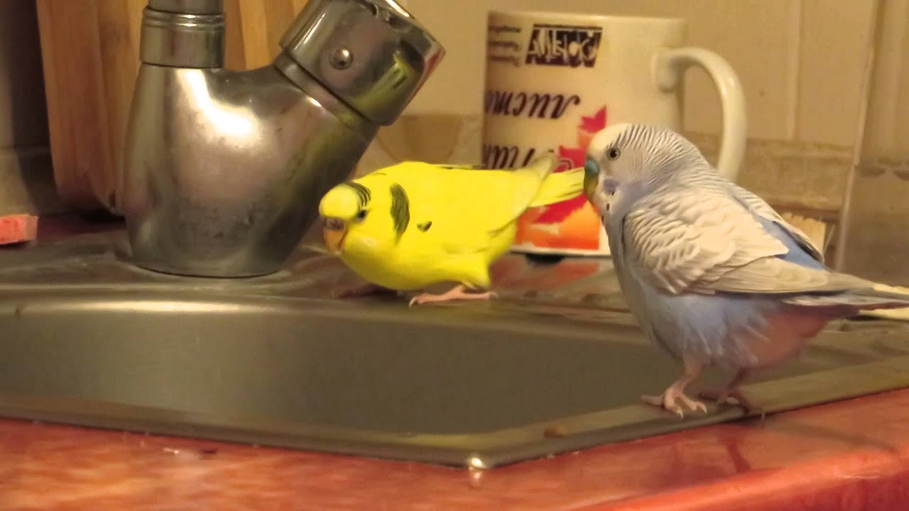Смотри фото секс валнистава попугая 14 фотография