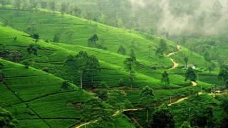 Derek XXX - Pakistan Tea Garden (Original Mix)