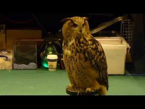 London Pet Show – Birds Of Prey