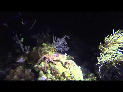Bananarama Roatan 2015 diving video and pics