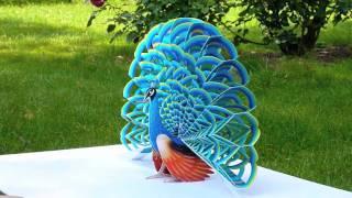 Paper Pop-Up Peacock