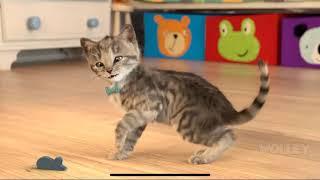 Little Kitten My Favorite Cat Pet Care - Play Cute Kitten Animation Mini Games For Children