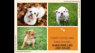Funny,Cute dogs and their sound