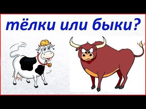 На чем можно заработать в деревне // Тёлки или быки // Жизнь в деревне