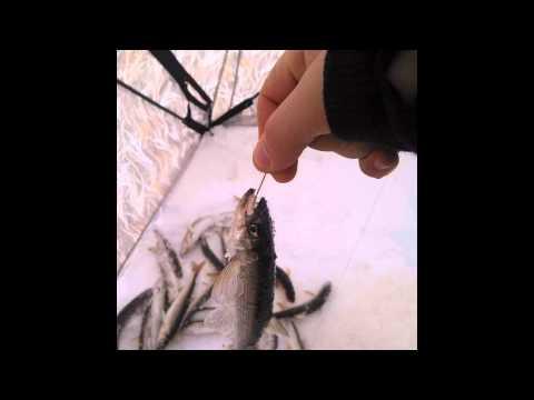 техника ловли корюшки на махалки