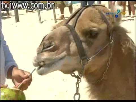 [HQ] Pânico na TV 23-08-2009 - Vesgo e Silvio Santos - Natal, Rio Grande do Norte