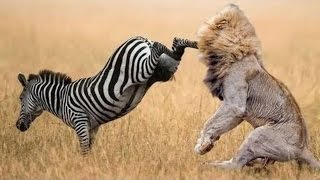 When Prey Fights Back | Most Amazing Animal Attack Fails 2016