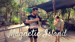 Animals of Magnetic Island | AUSTRALIA VLOG