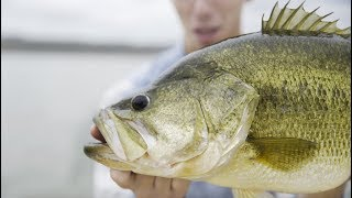 Bass Fishing PARADISE Hidden In The Mountains