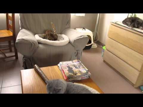 10 chats .... et pas un bruit streaming vf