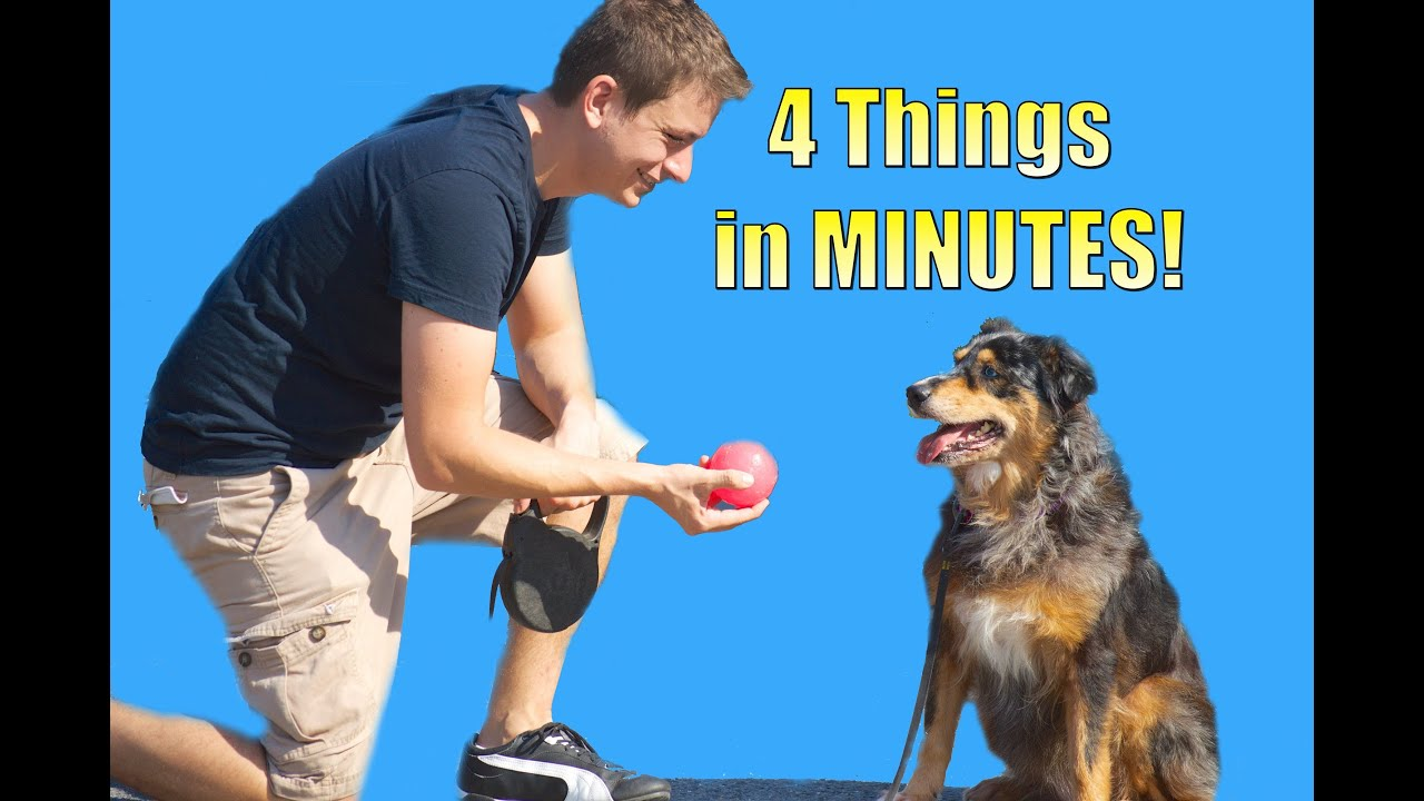 How Do You Train Your Dog To Come