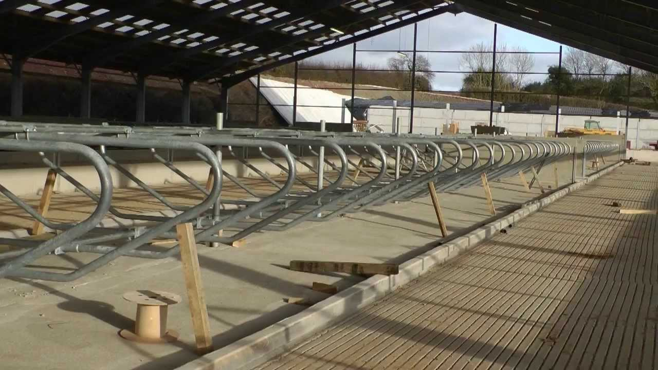Building A Cow Shed 24