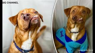 Top 10 Deformed Animals Given A Second Chance