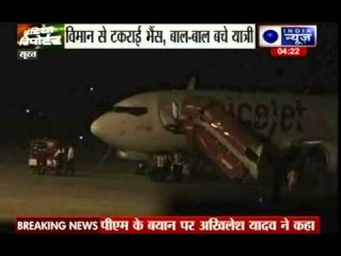 Spicejet plane crashes into buffalo at Surat Airport