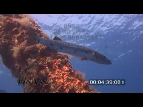 7/24/2005 Gulf Of Mexico Scuba Dive Video At The DOD L-Tower Barracuda