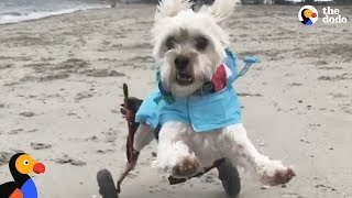 Myths About Special Needs Pets That Are Totally False | The Dodo
