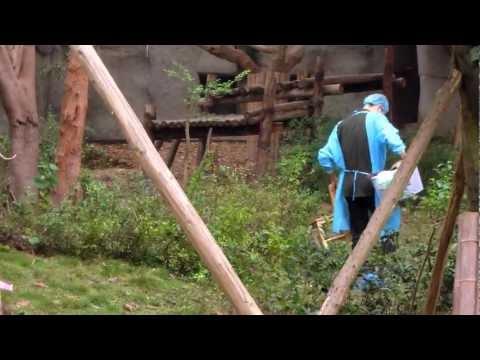 動物園の赤ちゃんパンダはしまわれる