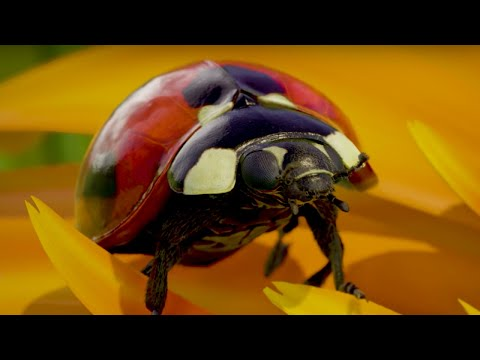 Xbox One X Official Insects Demo Trailer