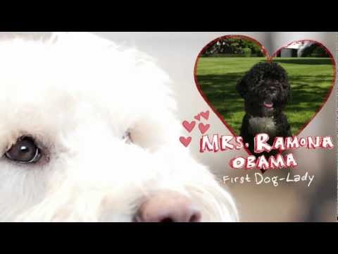 An Invitation For Bo Obama from the Oregon Humane Society (and Ramona!) - HD