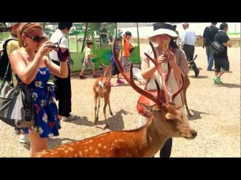 【動画】 奈良の鹿、女子高生のスカートをめくるwwwwwwwww