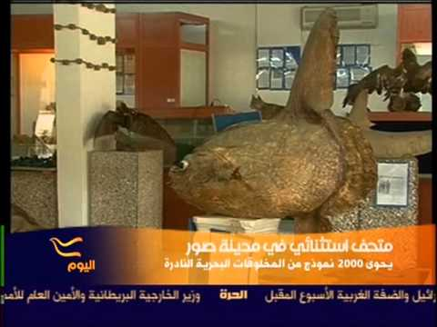Interview With The Owner Of The Lebanese Marine And Wildlife Museum Dr. Jamal Younes