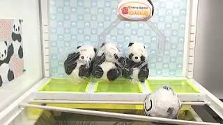 Toreba Win! Thank You Panda - Medium-Big Plushy C