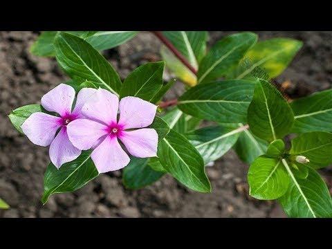 Sei sehr vorsichtig! Eine dieser 5 Pflanzen solltest du niemals im Haus haben