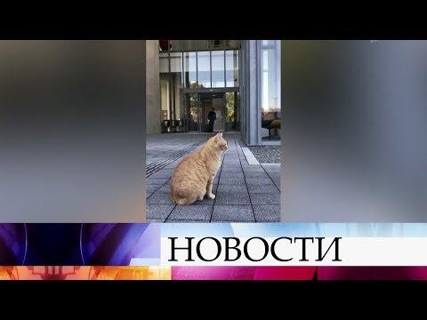 В Японии два кота третий год ведут войну с охранниками, пытаясь прорваться в музей.
