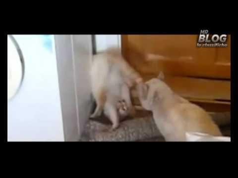 Mr. Blog – video Animali divertentissimi – Gatti e cani Fenomenali
