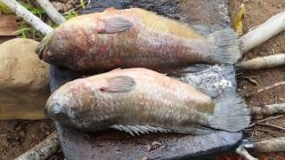 Primitive Technology -cooking fish on the rock in forest - cooking fish  delicious
