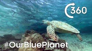 Turtle-y Awesome 360° 🐢  #OurBluePlanet | Earth Unplugged