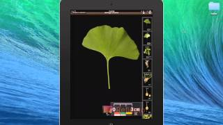 Tutorial for LeafSnap