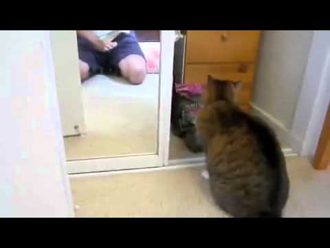 Дурной кот :D
