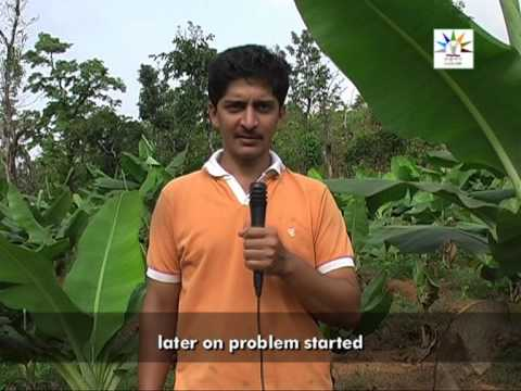 Banana Cultivation for livelihood security English Part 1