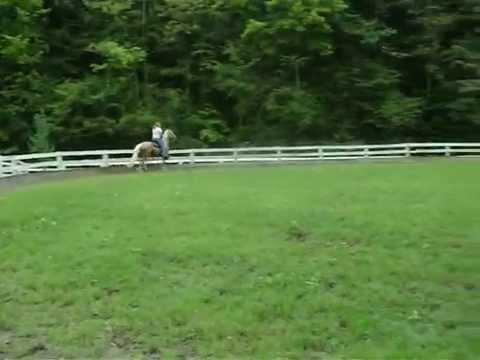 Skywalker Racking Stallion