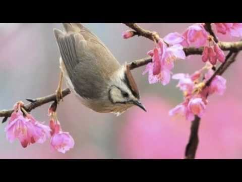 Kd Lang - I Dream of Spring