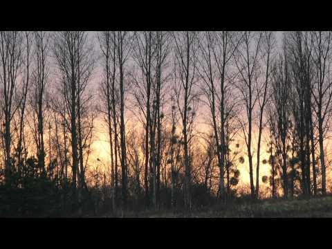 Шопен Фредерик - Opus 28 No 20 In C Minor
