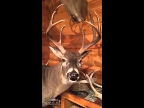 Buck The Singing Deer Head For Sale Gemmy Just BCAUSE